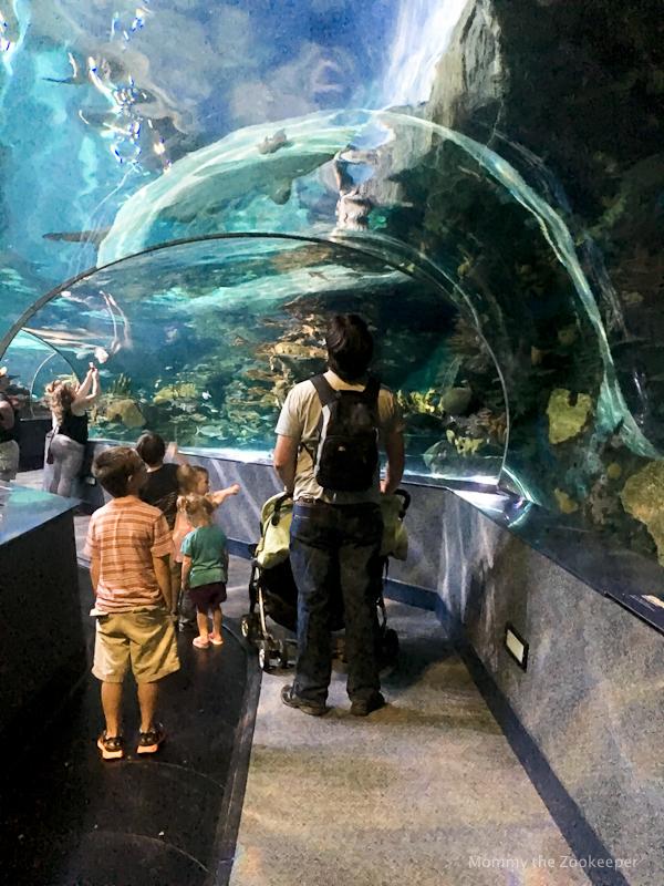 ripleys-aquarium-of-the-smoky-mountains-0997