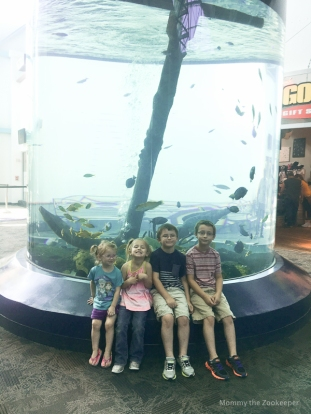 ripleys-aquarium-of-the-smoky-mountains-1027