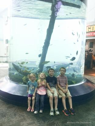 ripleys-aquarium-of-the-smoky-mountains-1027