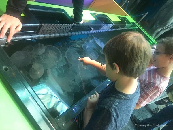 ripleys-aquarium-of-the-smoky-mountains-1037