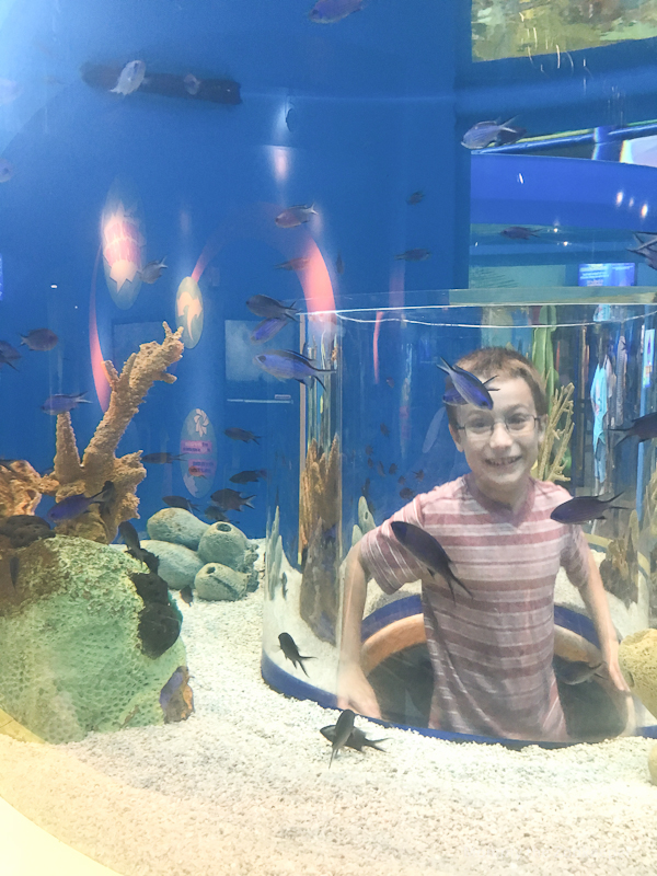 ripleys-aquarium-of-the-smoky-mountains-1047