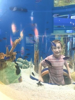 ripleys-aquarium-of-the-smoky-mountains-1047