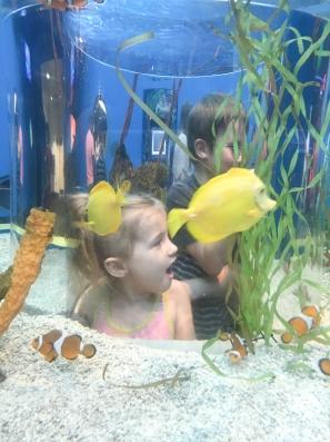 ripleys-aquarium-of-the-smoky-mountains-1049
