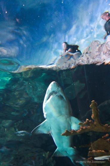 Ripley S Aquarium Of The Smokies Mommy The Zookeeper