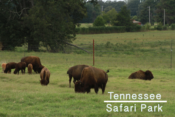 tennessee-safari-park-zoo