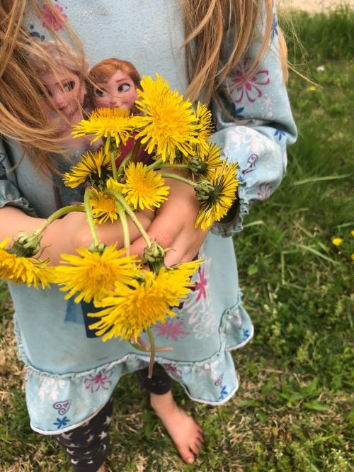 Little girl picking dandelions